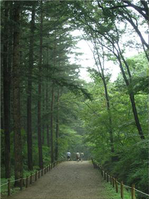 자료출처 : 국립수목원[http://www.forest.go.kr]